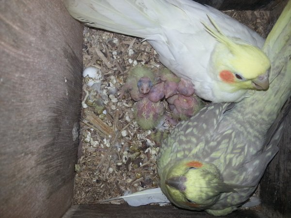 choupie ,kojak et leurs bébés