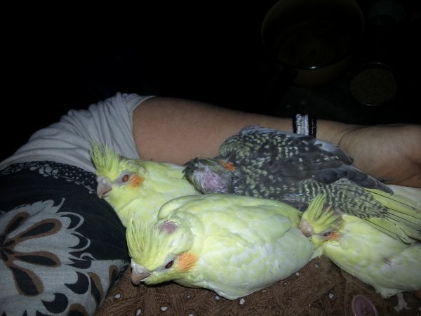 les bébés de choupie et kojak