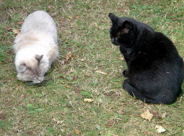 déjà 25 semaine que tu es partie mémère - Hommage as mémère une de mais chatte décède