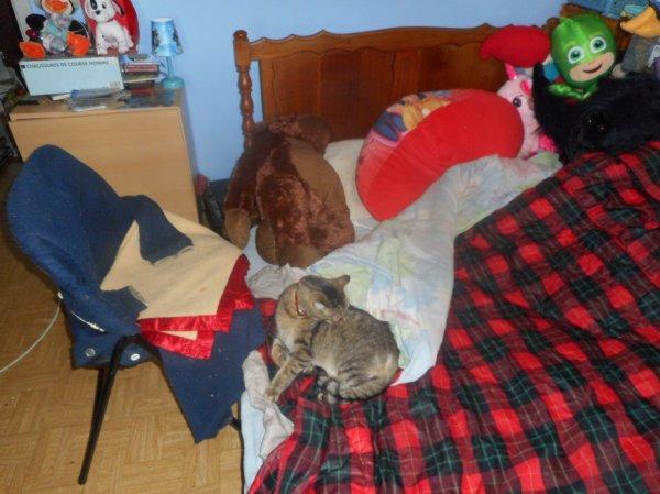 déjà 26 semaine que tu es partie mémère - Hommage as mémère une de mais chatte décède