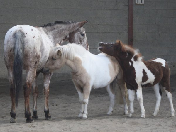 """La prochaine fois que l'on vous dira ; """" Ce ne sont que des chevaux ! """"  Contentez vous de sourire car ils ne peuvent pas comprendre .."""
