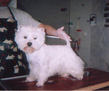 Blog de leschiens25 les differentes races de chiens - Combien de temps pour porter plainte pour coup et blessure ...