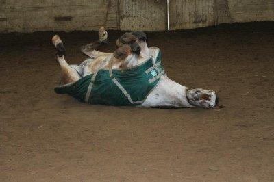 Les chevaux sont des créatures mystérieuses, ou divines.