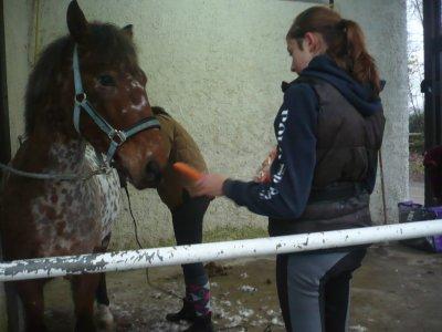 Le cheval est votre miroir .