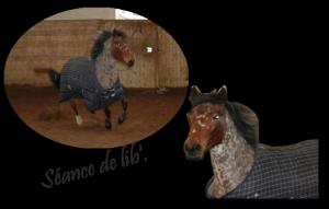 Le cheval est bien plus que la plus belle conquête de l'homme.