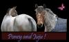 Un poney et une jument.