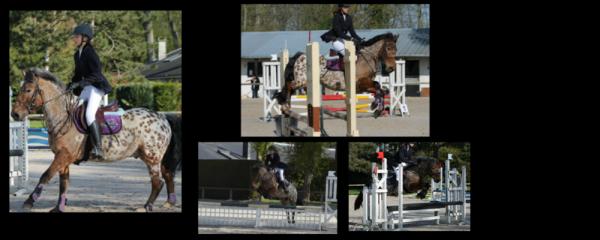 Les chevaux n'aiment pas la routine.