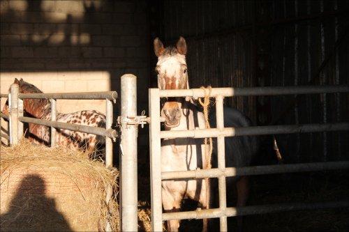 De retour chez nos cow boys !!
