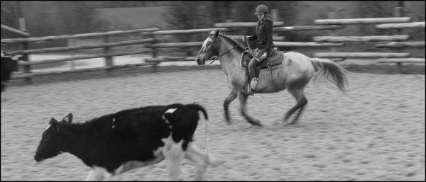 Ce sont plus que des chevaux, ce sont des véritables partenaires !