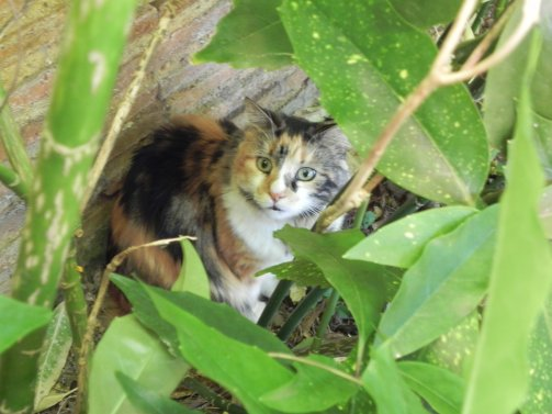 Ce chat est aussi aimable que moi.. =)