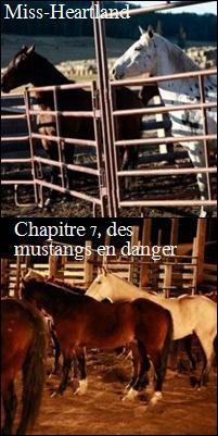 chapitre 7 : des mustangs en danger