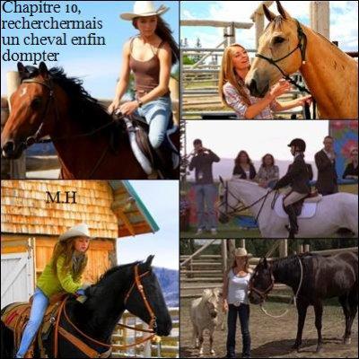 chapitre 10 : recherches mais un cheval enfin dompté