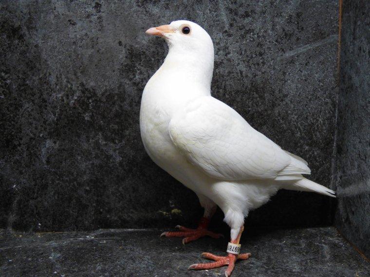 le blanc separement de sa soeur de nid