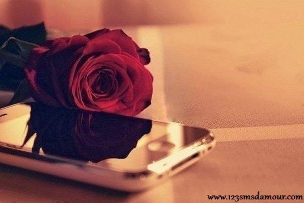 de fleur a toi × jetaime.