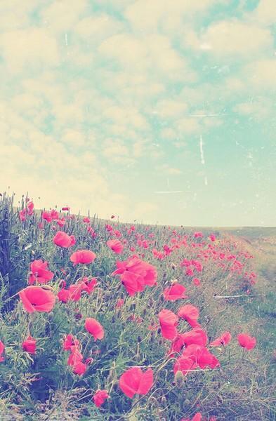 Tu sais je t'aime beaucoup mais je ne veux pas retomber amoureuse de toi alors on reste eloigner même si je me rapproche.