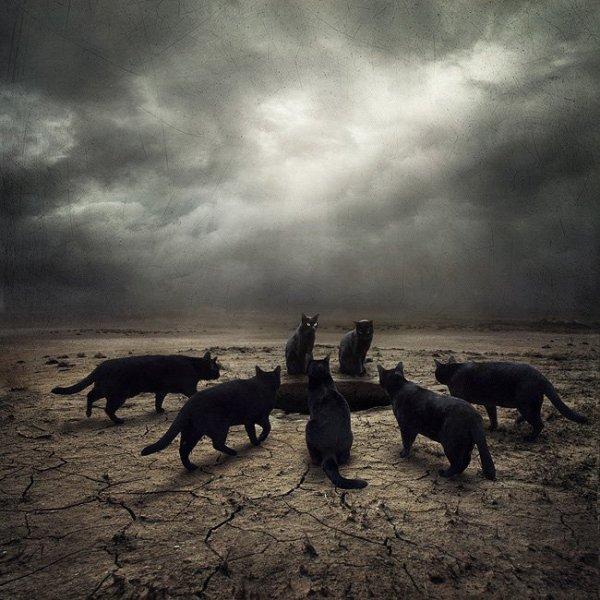 J'adore les chats ^^