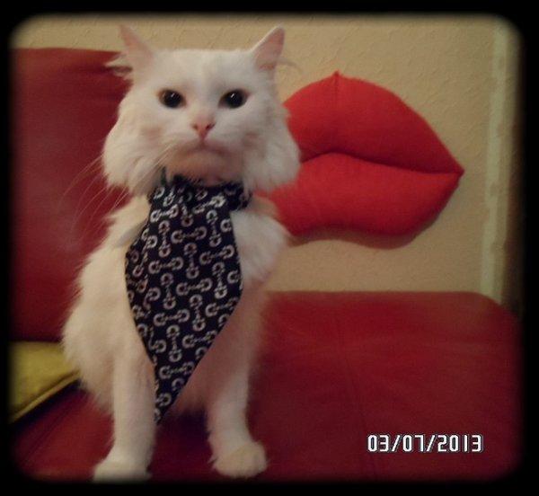 Mon Figaro et sa jolie cravate ^^