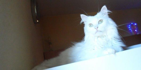Figaro <3