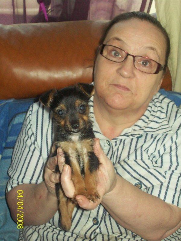 voicie ma chienne JESSIE AVEC MOI (  yokshire ) elle et née le 29 janvier 2014