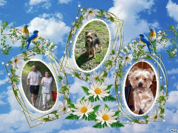 voici des montages  de moi des chiens et de mon mari quand on se promenais dans les bois ces vieux c'etais en 2008