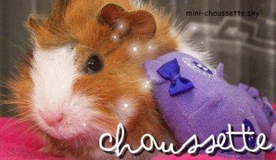 ★ Chaussette ★
