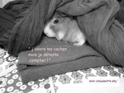 ♫ Mini séance photo de Chaussette ♫