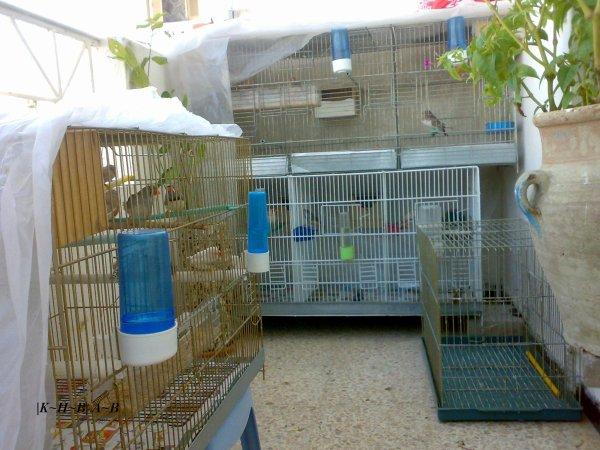 mes cage d'élevage