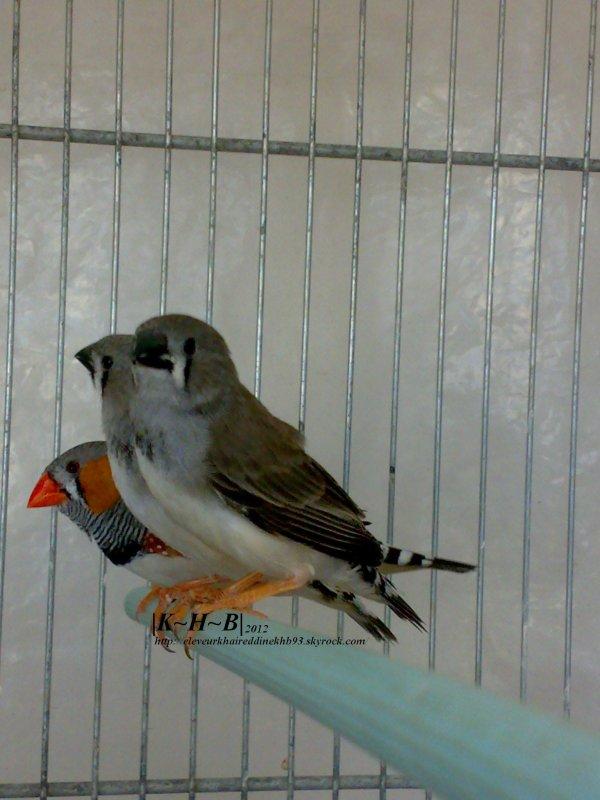 Résultat entre male Ts et femelle punguin