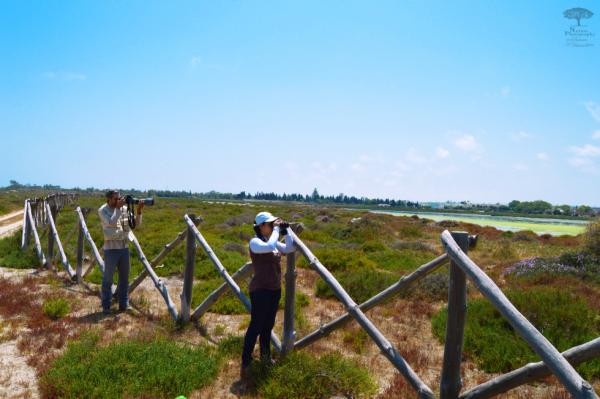 Sortie d'observation ornithologique  au Lac korba tunisie