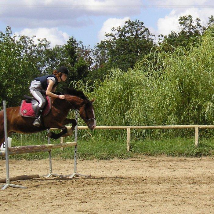 les chevaux... ma vie !!!