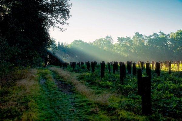 N'allez pas là où le chemin peut mener. Allez là où il n'y a pas de chemin et laissez une trace. (Ralph Waldo Emerson)