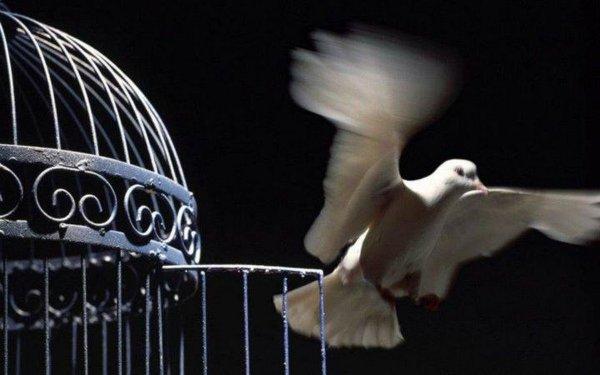 Ouvrez, ouvrez la cage aux oiseaux