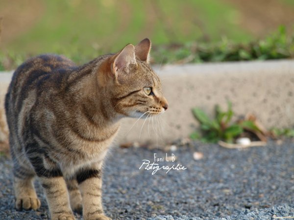 Unknown cat.