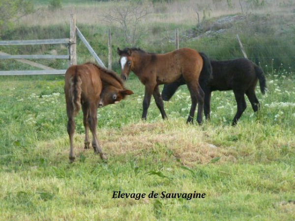 Estello de Sauvagine (A réserver) , Eden & Enjoy de Sauvagine