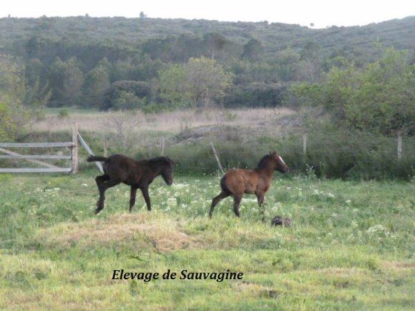 Enjoy de Sauvagine & Eden de Sauvagine