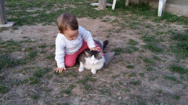 Pauvre chat :-)