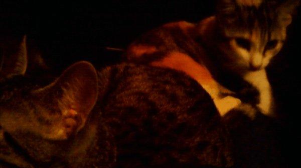 Molly et Ninou