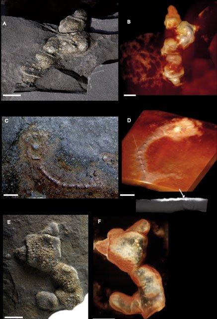 Il y a près de 2.1 milliards d'années que la biodiversité existe or les scientifiques l'avaient estimées à 600 millions d'années