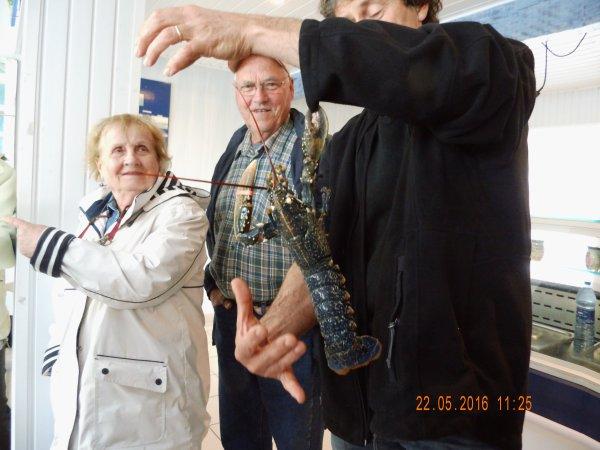 Il en pince pour Bertrand, notre ami le homard