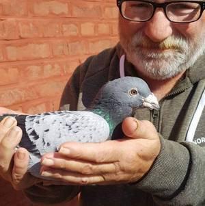 La vente des pigeons du champion  VICHERY Angélo  décédé le mois dernier, sera organisée à l'issue de la vente des jeunes de la société de Sains en Gohelle en son local Avenue Lyautey vers 17h30   le DIMANCHE 26/01/2020
