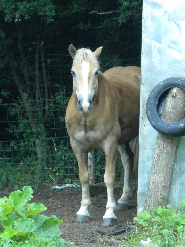 # <3 bien plus qu'un cheval...