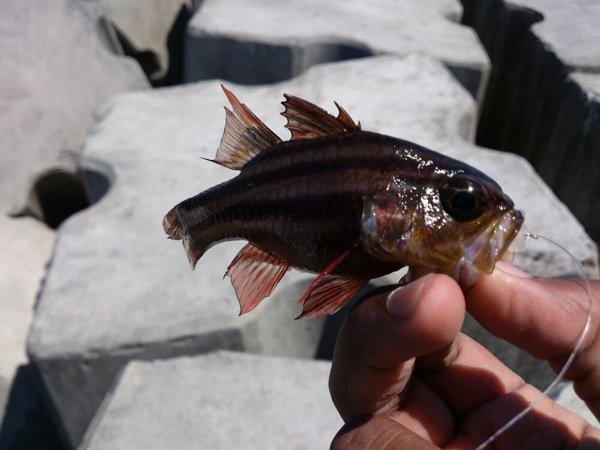Pêche au trou xD