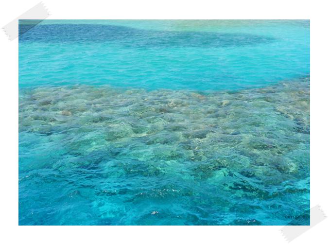 4. Mer rouge en Egypte, un paradis inoubliable
