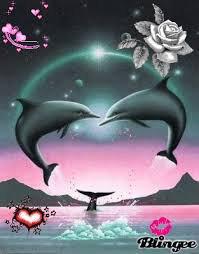 j'aime les dauphin