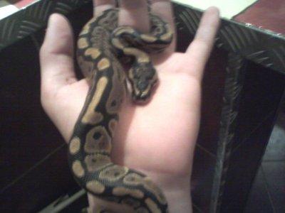le serpent d un pote