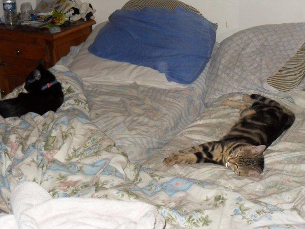 Histoire de couple dans le lit!