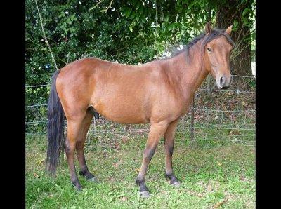 Les chevaux me manquent ...