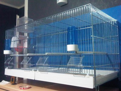 Nouvelle cage achetée aujourd'hui