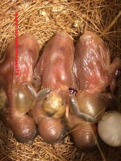 Évolution de bébés Gould