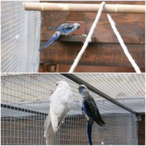 pennant argenté et pennant bleu